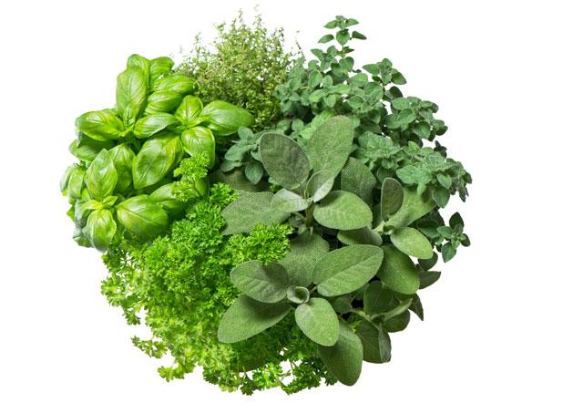 Cuisiner des plantes gourmandes